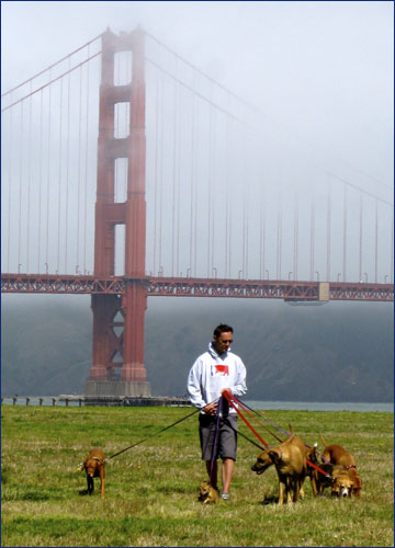 All Star Pet Care, Dogs on leash at Crissy Field, San Francisco